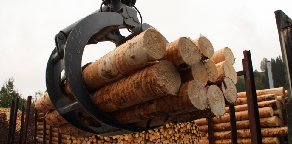 softwood log exports